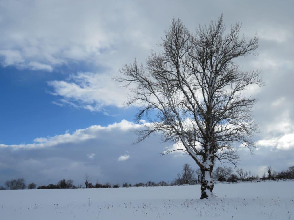 árbol magestuoso en la nieve